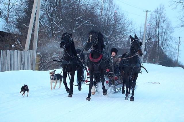 сани и лошади для кино, для свадьбы, для праздника